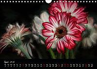 Gerberas Floral Impressions (Wall Calendar 2019 DIN A4 Landscape) - Produktdetailbild 4