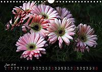 Gerberas Floral Impressions (Wall Calendar 2019 DIN A4 Landscape) - Produktdetailbild 6
