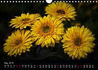 Gerberas Floral Impressions (Wall Calendar 2019 DIN A4 Landscape) - Produktdetailbild 5