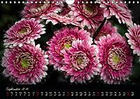 Gerberas Floral Impressions (Wall Calendar 2019 DIN A4 Landscape) - Produktdetailbild 9