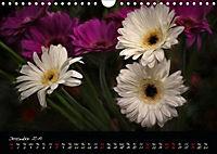 Gerberas Floral Impressions (Wall Calendar 2019 DIN A4 Landscape) - Produktdetailbild 12