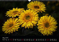 Gerberas Floral Impressions (Wall Calendar 2019 DIN A3 Landscape) - Produktdetailbild 5