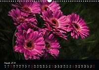 Gerberas Floral Impressions (Wall Calendar 2019 DIN A3 Landscape) - Produktdetailbild 3