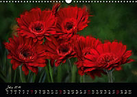 Gerberas Floral Impressions (Wall Calendar 2019 DIN A3 Landscape) - Produktdetailbild 7