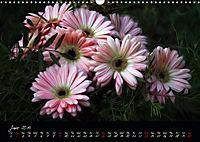 Gerberas Floral Impressions (Wall Calendar 2019 DIN A3 Landscape) - Produktdetailbild 6