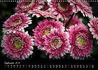 Gerberas Floral Impressions (Wall Calendar 2019 DIN A3 Landscape) - Produktdetailbild 9