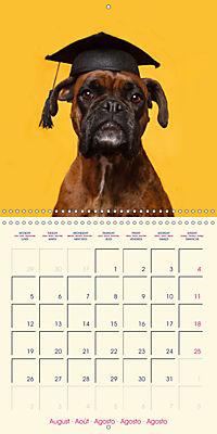 German Boxer (Wall Calendar 2019 300 × 300 mm Square) - Produktdetailbild 8
