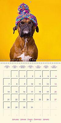 German Boxer (Wall Calendar 2019 300 × 300 mm Square) - Produktdetailbild 1