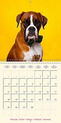 German Boxer (Wall Calendar 2019 300 × 300 mm Square) - Produktdetailbild 2
