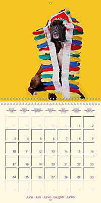 German Boxer (Wall Calendar 2019 300 × 300 mm Square) - Produktdetailbild 6