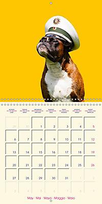 German Boxer (Wall Calendar 2019 300 × 300 mm Square) - Produktdetailbild 5