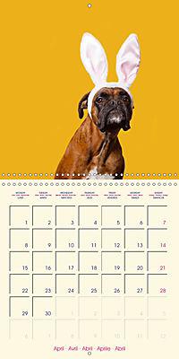 German Boxer (Wall Calendar 2019 300 × 300 mm Square) - Produktdetailbild 4