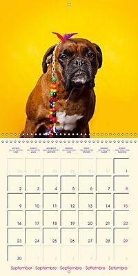 German Boxer (Wall Calendar 2019 300 × 300 mm Square) - Produktdetailbild 9