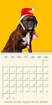 German Boxer (Wall Calendar 2019 300 × 300 mm Square) - Produktdetailbild 12