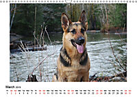German Shepherd Dog with Friends (Wall Calendar 2019 DIN A3 Landscape) - Produktdetailbild 3