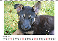 German Shepherd Dog with Friends (Wall Calendar 2019 DIN A3 Landscape) - Produktdetailbild 1