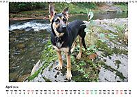 German Shepherd Dog with Friends (Wall Calendar 2019 DIN A3 Landscape) - Produktdetailbild 4