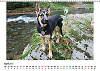 German Shepherd Dog with Friends (Wall Calendar 2019 DIN A3 Landscape) - Produktdetailbild 4