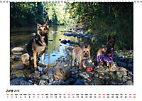 German Shepherd Dog with Friends (Wall Calendar 2019 DIN A3 Landscape) - Produktdetailbild 6