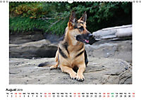 German Shepherd Dog with Friends (Wall Calendar 2019 DIN A3 Landscape) - Produktdetailbild 8