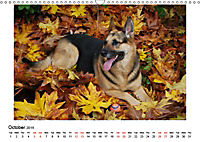 German Shepherd Dog with Friends (Wall Calendar 2019 DIN A3 Landscape) - Produktdetailbild 10