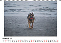 German Shepherd Dog with Friends (Wall Calendar 2019 DIN A3 Landscape) - Produktdetailbild 11