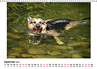 German Shepherd Dog with Friends (Wall Calendar 2019 DIN A3 Landscape) - Produktdetailbild 9