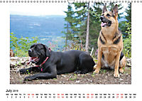 German Shepherd Dog with Friends (Wall Calendar 2019 DIN A3 Landscape) - Produktdetailbild 7