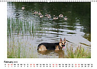 German Shepherd Dog with Friends (Wall Calendar 2019 DIN A3 Landscape) - Produktdetailbild 2