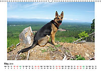 German Shepherd Dog with Friends (Wall Calendar 2019 DIN A3 Landscape) - Produktdetailbild 5