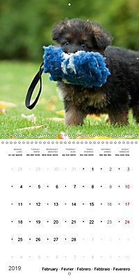 German Shepherd Puppies (Wall Calendar 2019 300 × 300 mm Square) - Produktdetailbild 2