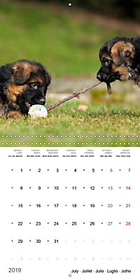 German Shepherd Puppies (Wall Calendar 2019 300 × 300 mm Square) - Produktdetailbild 7