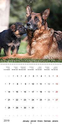 German Shepherd Puppies (Wall Calendar 2019 300 × 300 mm Square) - Produktdetailbild 1