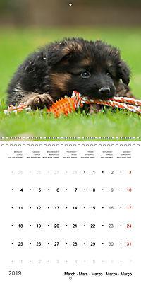 German Shepherd Puppies (Wall Calendar 2019 300 × 300 mm Square) - Produktdetailbild 3