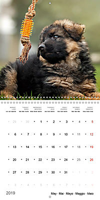 German Shepherd Puppies (Wall Calendar 2019 300 × 300 mm Square) - Produktdetailbild 5