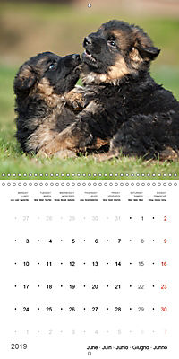 German Shepherd Puppies (Wall Calendar 2019 300 × 300 mm Square) - Produktdetailbild 6