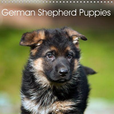 German Shepherd Puppies (Wall Calendar 2019 300 × 300 mm Square), Petra Schiller