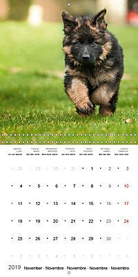 German Shepherd Puppies (Wall Calendar 2019 300 × 300 mm Square) - Produktdetailbild 11