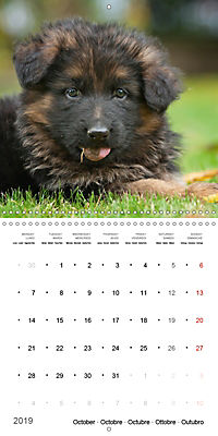 German Shepherd Puppies (Wall Calendar 2019 300 × 300 mm Square) - Produktdetailbild 10