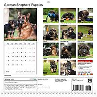 German Shepherd Puppies (Wall Calendar 2019 300 × 300 mm Square) - Produktdetailbild 13