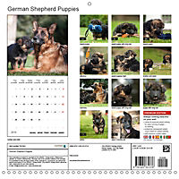 German Shepherd Puppies (Wall Calendar 2019 300 × 300 mm Square) - Produktdetailbild 13