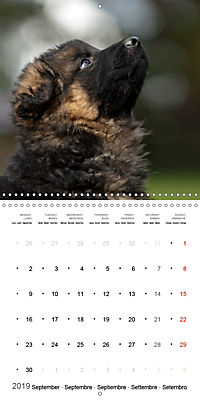 German Shepherd Puppies (Wall Calendar 2019 300 × 300 mm Square) - Produktdetailbild 9