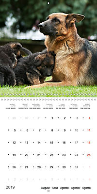 German Shepherd Puppies (Wall Calendar 2019 300 × 300 mm Square) - Produktdetailbild 8