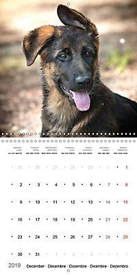 German Shepherd Puppies (Wall Calendar 2019 300 × 300 mm Square) - Produktdetailbild 12