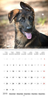 German Shepherd Puppies (Wall Calendar 2019 300 × 300 mm Square) - Produktdetailbild 12
