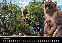 Gibraltar - der Affenfelsen (Tischkalender 2019 DIN A5 quer) - Produktdetailbild 2