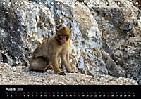 Gibraltar - der Affenfelsen (Tischkalender 2019 DIN A5 quer) - Produktdetailbild 8
