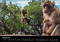 Gibraltar - der Affenfelsen (Wandkalender 2019 DIN A2 quer) - Produktdetailbild 2