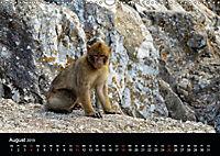 Gibraltar - der Affenfelsen (Wandkalender 2019 DIN A3 quer) - Produktdetailbild 8