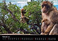 Gibraltar - der Affenfelsen (Wandkalender 2019 DIN A4 quer) - Produktdetailbild 2